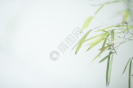 中国风极简竹子图片