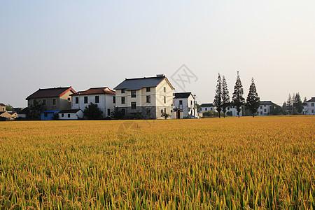 乡村秋色图片