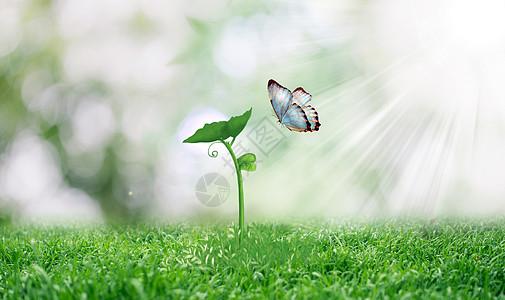 春天发芽植物和蝴蝶壁纸图片