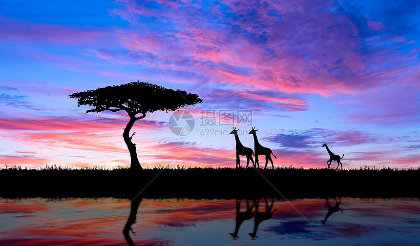 彩霞与动物剪影图片