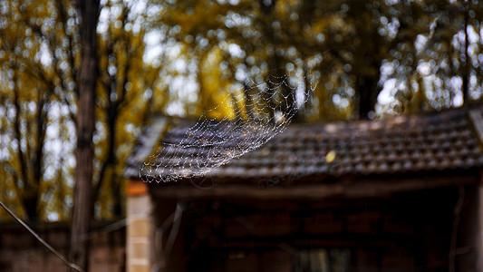 秋雨后的蜘蛛网图片