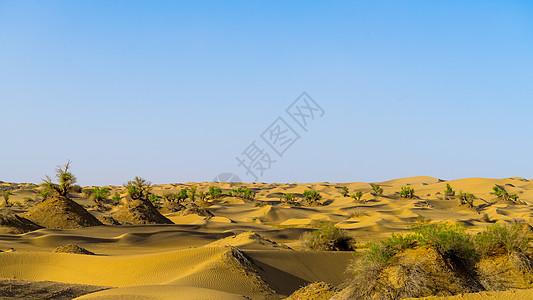 新疆塔克拉玛干大沙漠图片