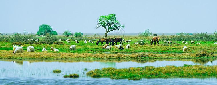 塔克拉玛干沙漠绿洲图片