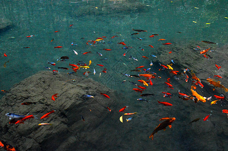 雁荡山净名谷鲤鱼图片