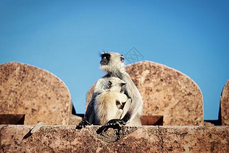 陷入沉思中的母猴图片