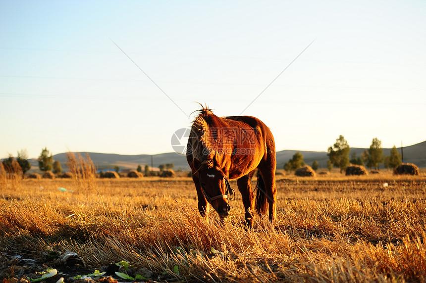 草原上的一匹马图片