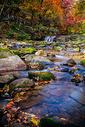 森林公园秋色红叶图片