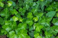 绿色植物的叶子图片
