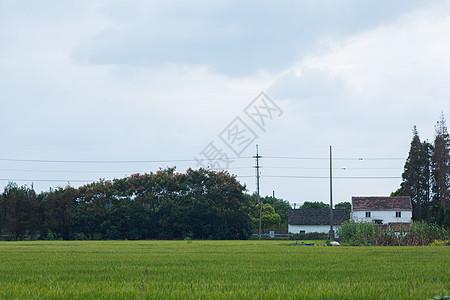 新农村的稻田图片