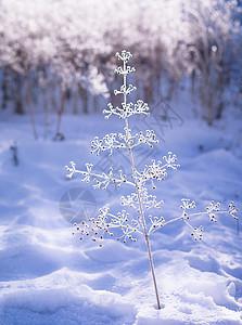 冬天美丽的雪景一棵小树图片