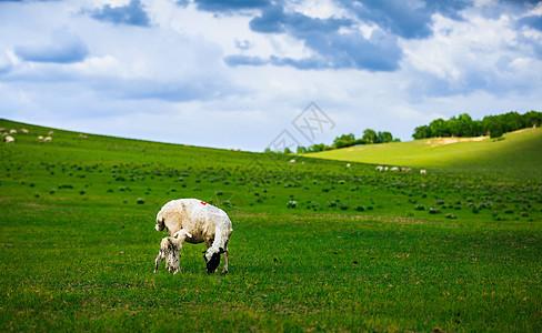 坝上草原美丽的风光图片