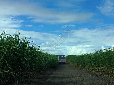 行驶在毛里求斯干净简约的田间小道上图片