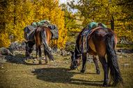 金秋草原上的马儿图片