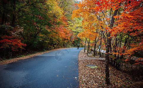 秋天美丽的红枫图片