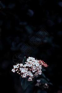 暗调风格野花图片