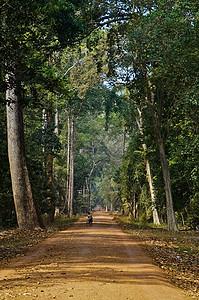 东南亚林荫大道图片