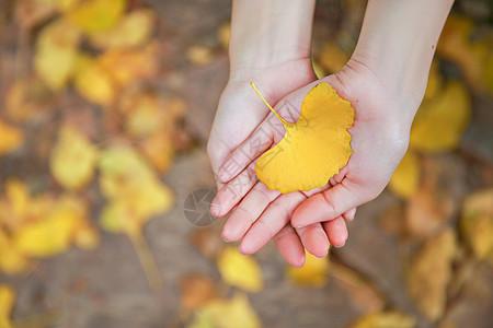 手心的银杏叶图片