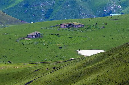 新疆特克斯草原图片