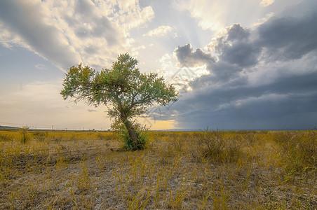 新疆戈壁绿洲日落草原胡杨图片