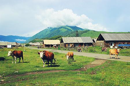 新疆禾木村图片