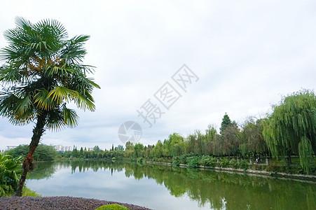 公园小湖风景 柳树环绕图片