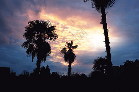傍晚时分公园一角晚霞夕阳下的树木图片