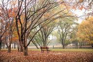 上海共青森林公园秋色图图片
