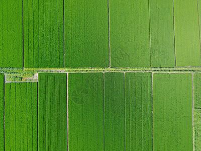 空中鸟瞰田园图片