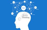 大脑结构图片