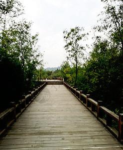 木栈道图片
