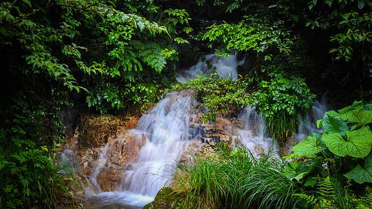 绿色植物掩映中的溪流瀑布图片