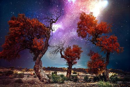 梦幻星空下的胡杨林图片