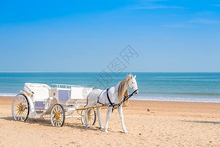 青岛海滨婚纱摄影基地海边马车图片