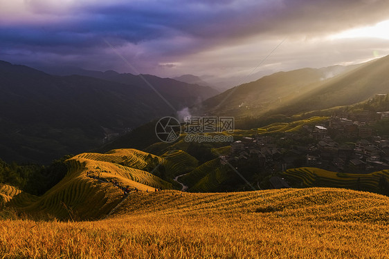 金色的龙脊梯田图片