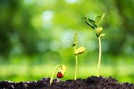 土壤中成长的新芽图片