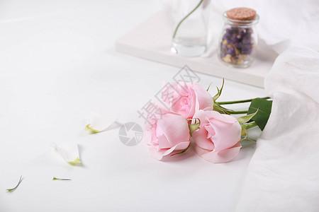 粉色玫瑰花素材图图片