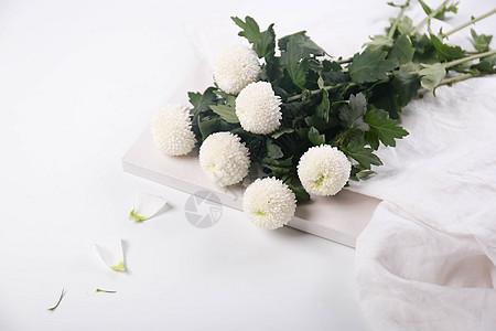 乒乓菊鲜花素材图图片