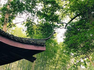 竹林中的亭子图片
