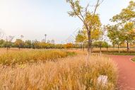 入秋的公园美景图片