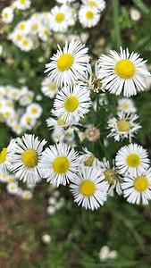 美丽的鲜花图片
