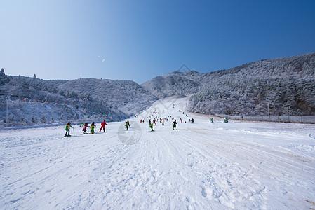 阳光正好激情滑雪图片