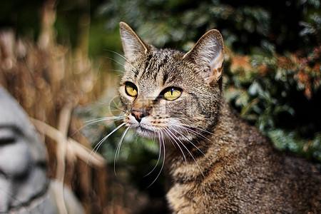 可爱的宠物猫高清图片