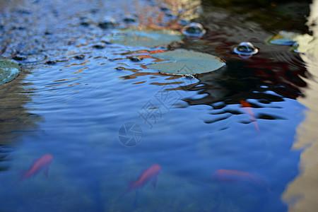 水里的鱼图片