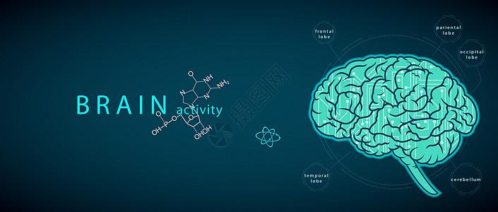 大脑活动图片