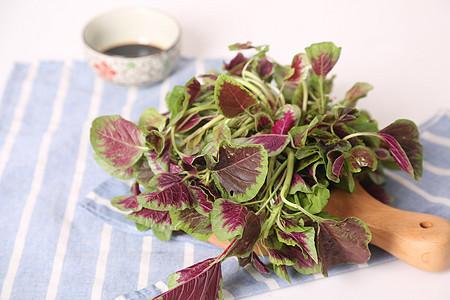 红苋菜图片