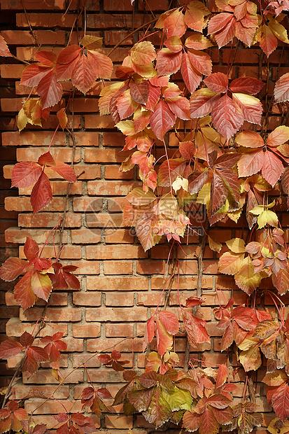 红砖树叶banner背景素材图片