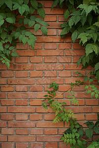 红砖树叶多彩背景墙图片