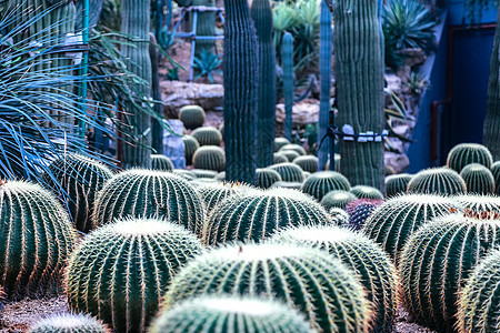 辰山植物园图片