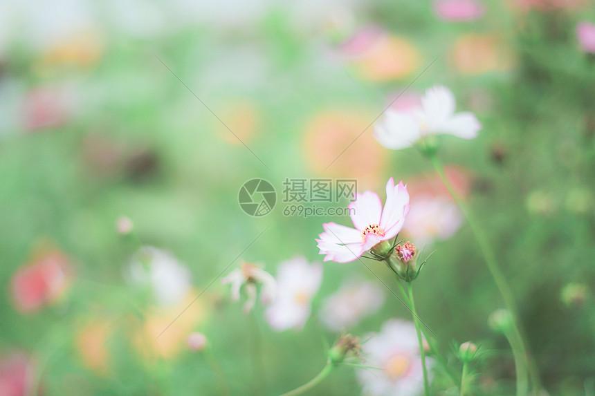 清新小花图片