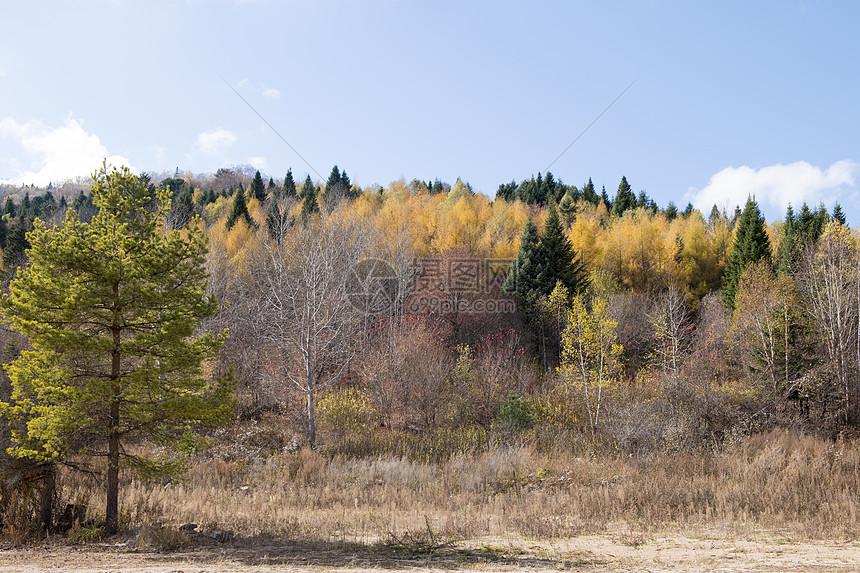 秋天风景图片